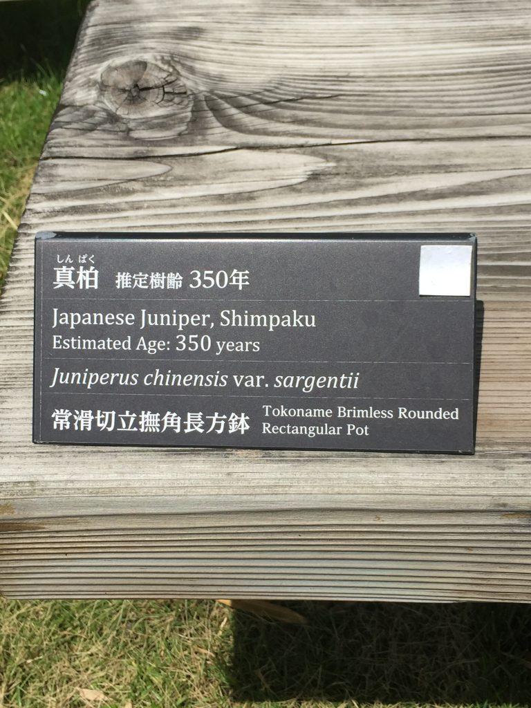 真柏_盆栽美術館