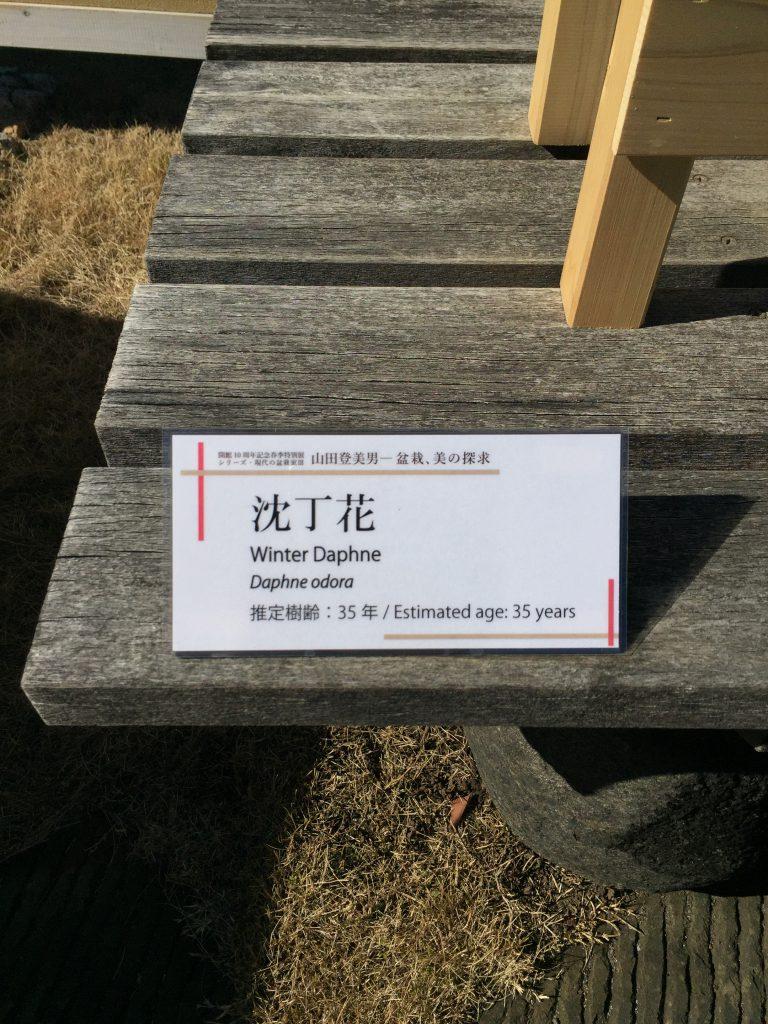 沈丁花_盆栽美術館