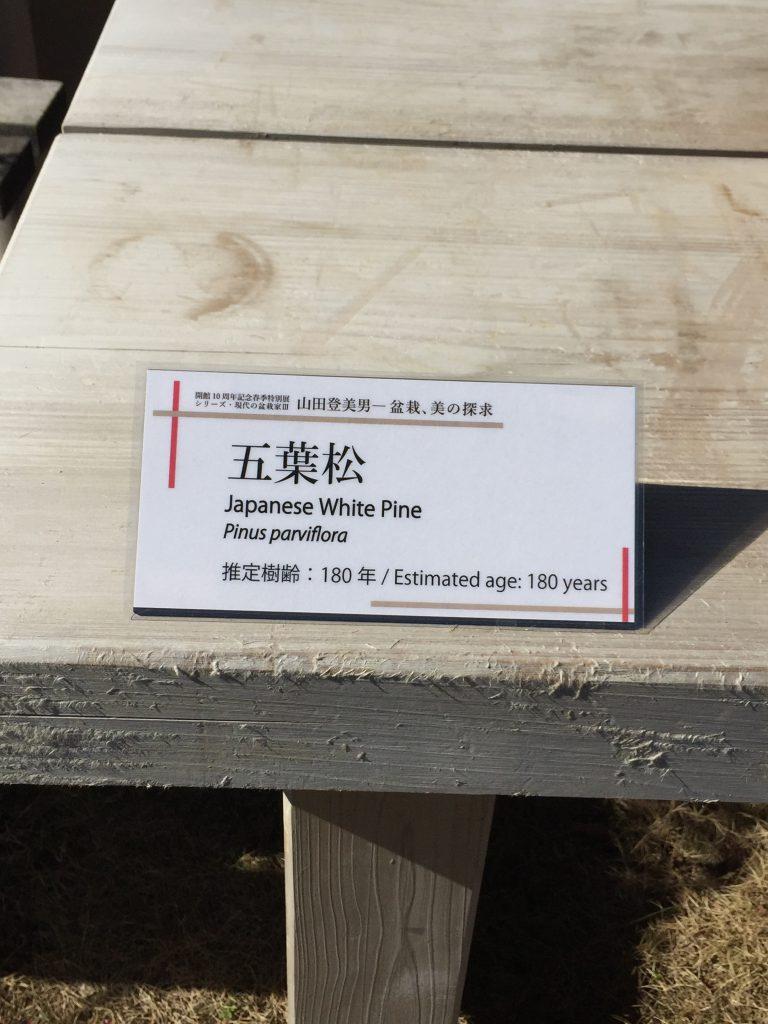 五葉松_盆栽美術館