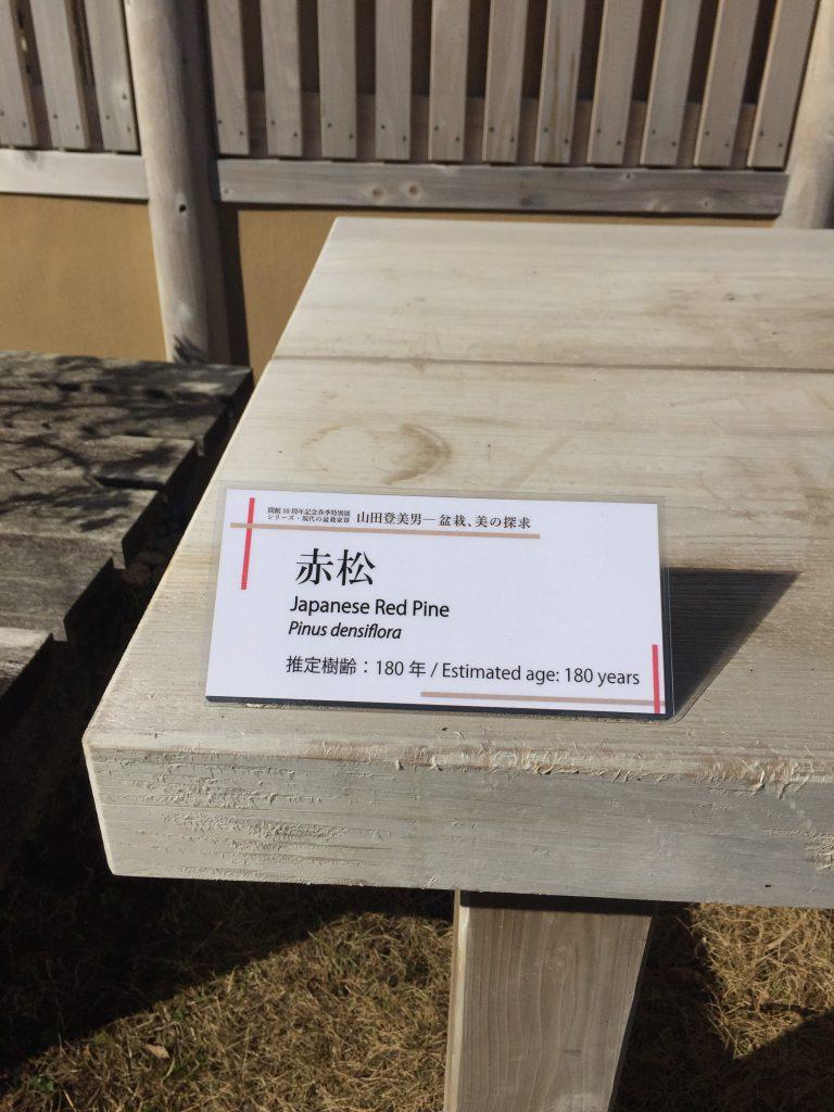 赤松_盆栽美術館